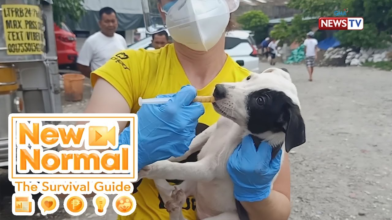 Bright Side: Animal heroes sa gitna ng pandemya, kilalanin! | New Normal