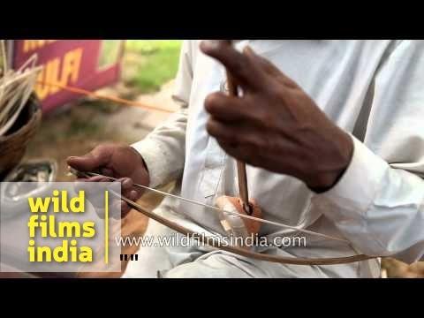 Rajasthani plays Ektara, a traditional stringed instrument of India