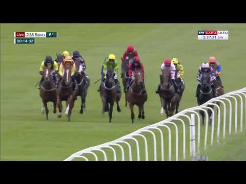 How On Earth Did This Horse Win?!