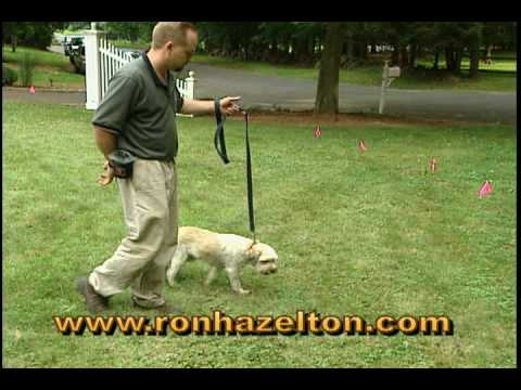 How to install an invisible dog fence youtube solutioingenieria Gallery