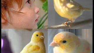 Leonardo Favio - El niño y el canario