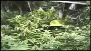 Mr Green How To Build A Basic Indoor Weed Grow Room - Step By Step Construction Guide (1 Of 9)