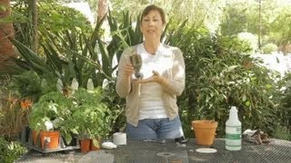 How To Make A Self-watering Garden Container : Garden Space