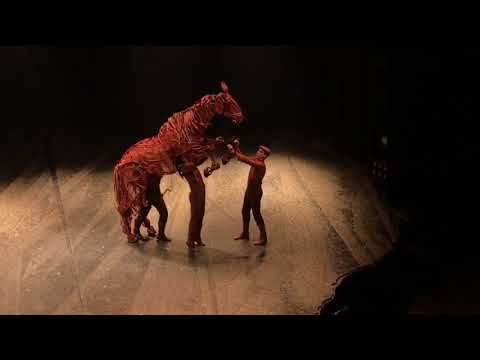 Curtain Call / Standing Ovation War Horse 2018 CAST Thomas Dennis