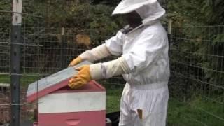 Beekeeping - Preparing For Winter - Happy And Disease Free Bees
