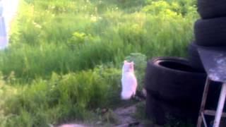Кот толик под наркотой