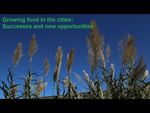 BB50: Growing food in the cities: Successes and new opportunities