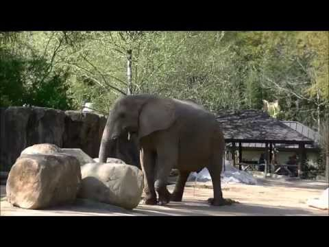 Field Trip to Riverbanks Zoo Columbia SC 4-1-2015