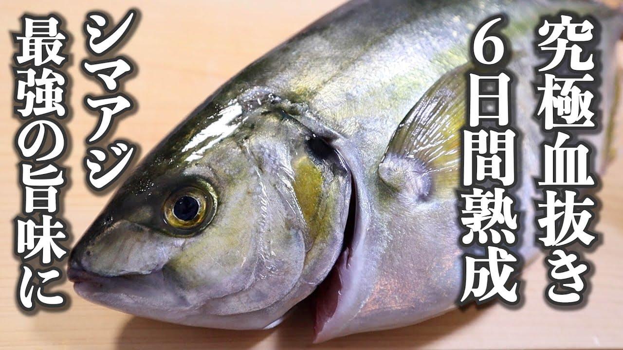【旨味倍増】シマアジのさばき方~熟成のコツと刺身の切り方