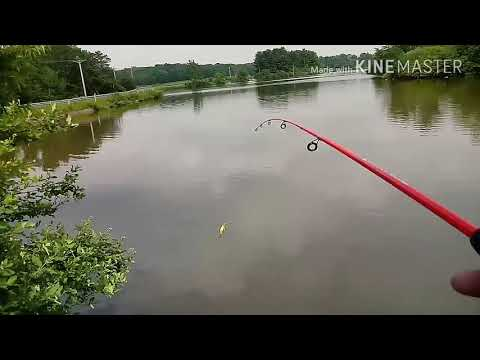 Cheap Walmart Fishing Rod Bass And Catfish
