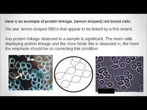 Live Blood Analysis Online Training Course - IS IT FOR YOU?