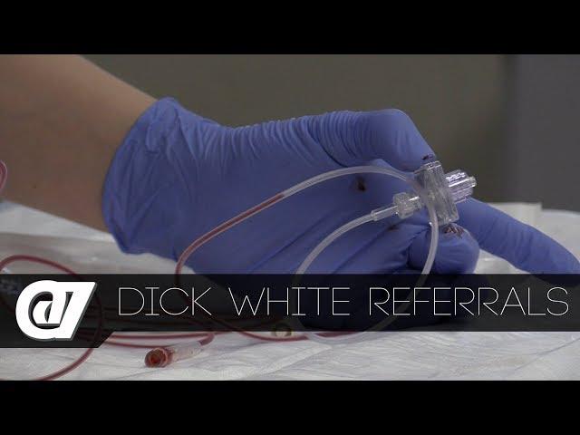 @7 - Dick White Referrals    Animal care