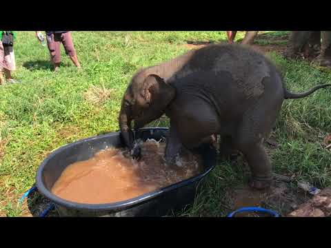 a-baby-elephant-named-bang