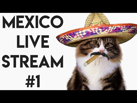 MEXICO CITY FOOD POISONING LIVE STREAM