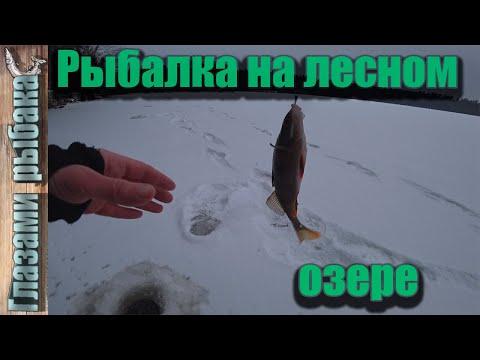Рыбалка на лесном озере. Озеро Фигурное.