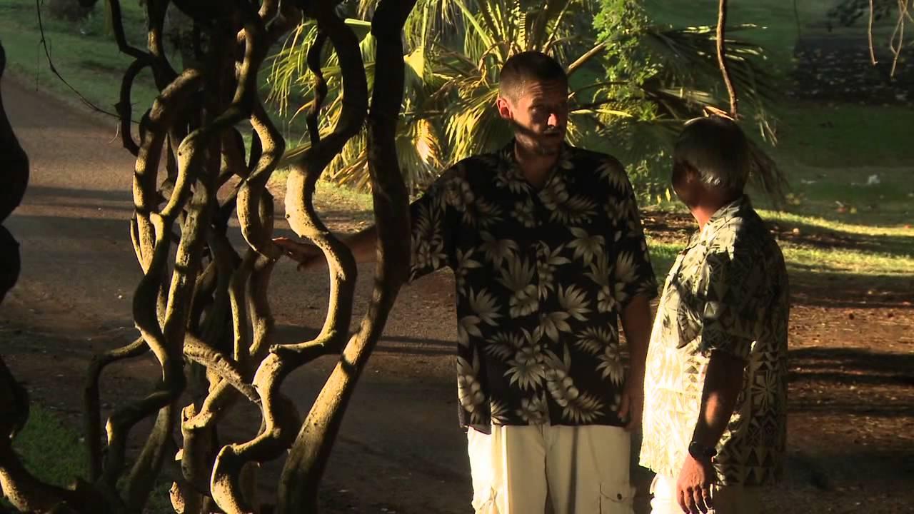 Woody Liana Vine - McBryde Garden - National Tropical Botanical ...