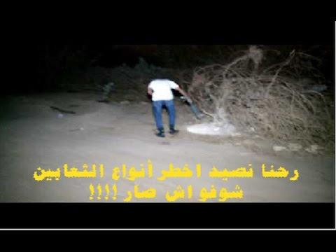 رحنا نصيد اخطر أنواع الثعابين      شوفو اش صار !!!!