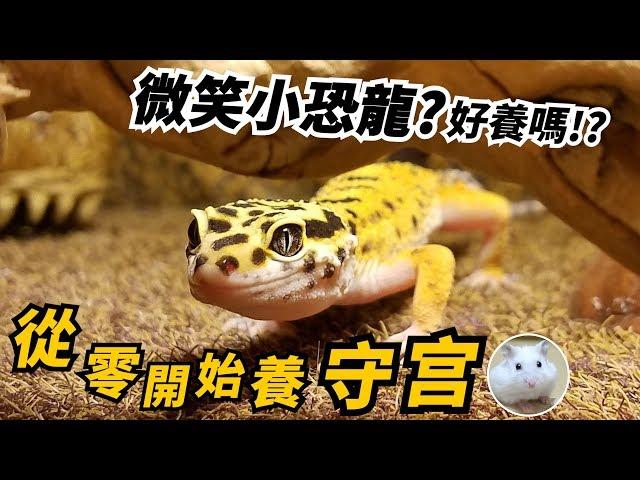 【從零開始養】豹紋守宮-微笑小恐龍好養嗎?跟倉鼠鵪鶉比賽吃蟲!【許伯簡芝】飼養分享
