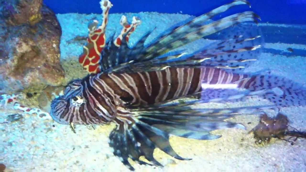 Cool Salt Water Fish - YouTube