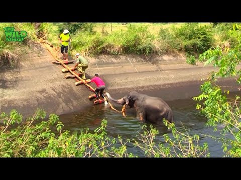 This elephant doesn't want anyone's help