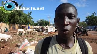 Mali : Tabaski : Les prix des moutons divisent clients et vendeurs [Reportage]