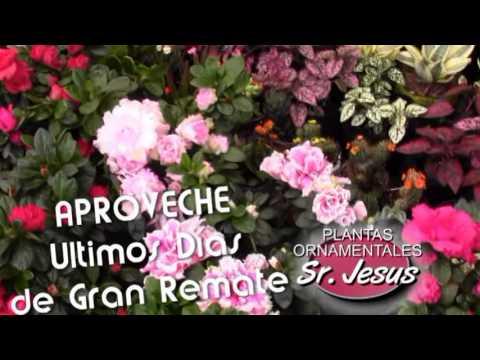 PLANTAS DE ORNATO JESUS.mpg