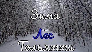 Зимний лес Тольятти. Записки горожанина #187