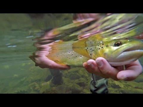 Pre spawn Fishing the Little Juniata River