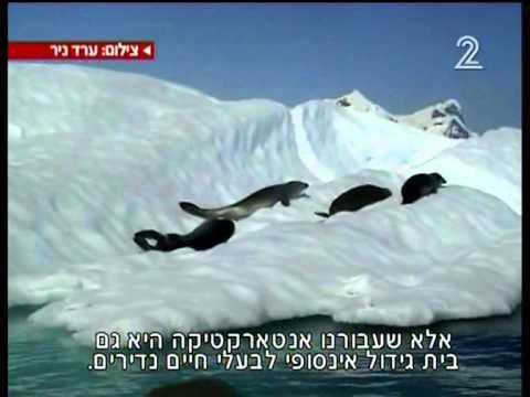 מסע לסוף העולם: ערד ניר באנטארקטיקה