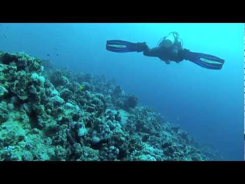 Red Sea Diving Moray Garden with Ehab