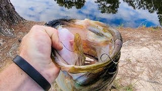 HUGE SWIMBAIT vs REAL LIVE BAIT!! Bass Fishing Challenge!! - GIANT BASS