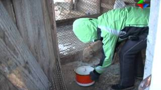 В Лесном открылся приют для бездомных животных