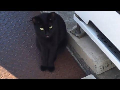 母ちゃんを会社へ行かせない!~どんどん能天気で人懐っこくなる猫 -Cat's Welcome and See Me Off