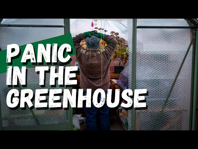 December garden chores  |  my favourite garden tools and a panic in the greenhouse