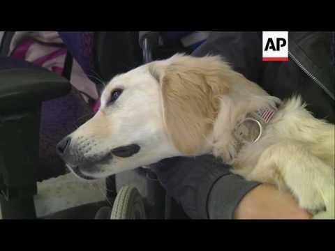 va's-study-of-service-dogs-for-ptsd-criticized