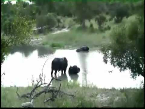 Kruger Sightings - Sunset Game Drive - February 10 2011