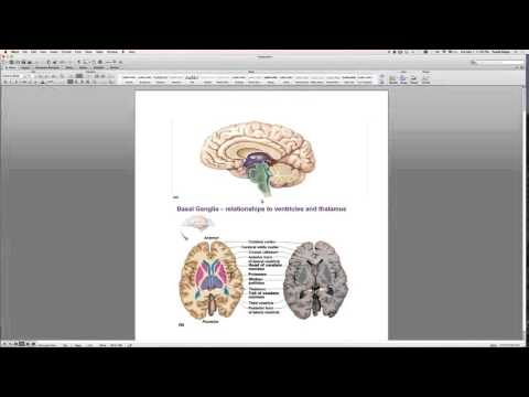 Chapter 12 Central Nervous System Exam Review
