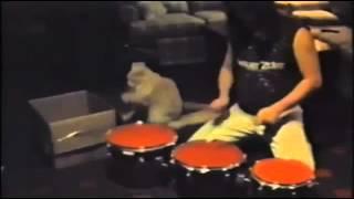 Drummer Cat! thumbnail