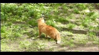 1.05.2016г ... Бирюлёво - Западное . Бездомные коты ,  Рыжий и Чёрный  .
