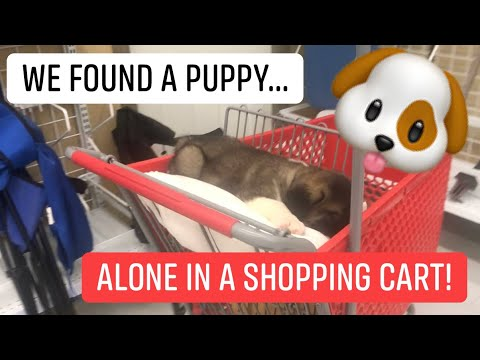 We found a puppy alone in a shopping cart!! (Service dog blog)