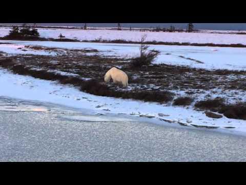Bear Baby Moving