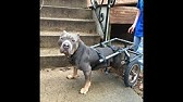 How To Make a Doggie Wheelchair for $25 - YouTube