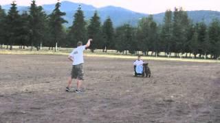 Obedience For Bites: Schutzhund Dog Training