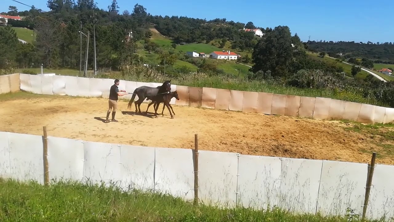 Aleluia Horse Dreams - Mãe e filho