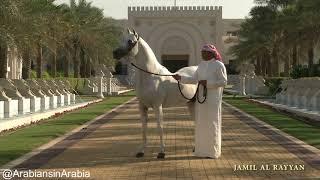Al Rashediah Stud , Arabian horses