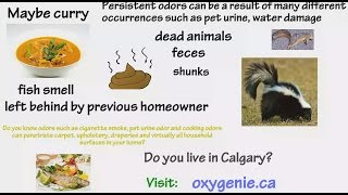 Unwanted Odor Removal In Calgary – Calgary Ozone Shock Treatment