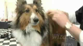 Learn The Basics Of Dog Grooming - The Wizard Of Paws Grooming School