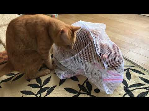 おかえりなさいな猫 Welcome back home cat『保護猫るる らら物語』
