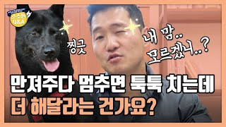 My Dog Touches Me When I Stop Petting it. Does My Dog Want Me to Continue? | Kang Hyung wook's Q&A