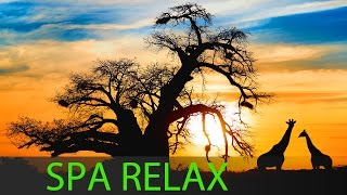 6 Hour Deep Meditation: Relax Mind Body, Spa Music, Background Music ☯106